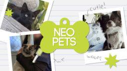 Neo Pets: Summer 2021
